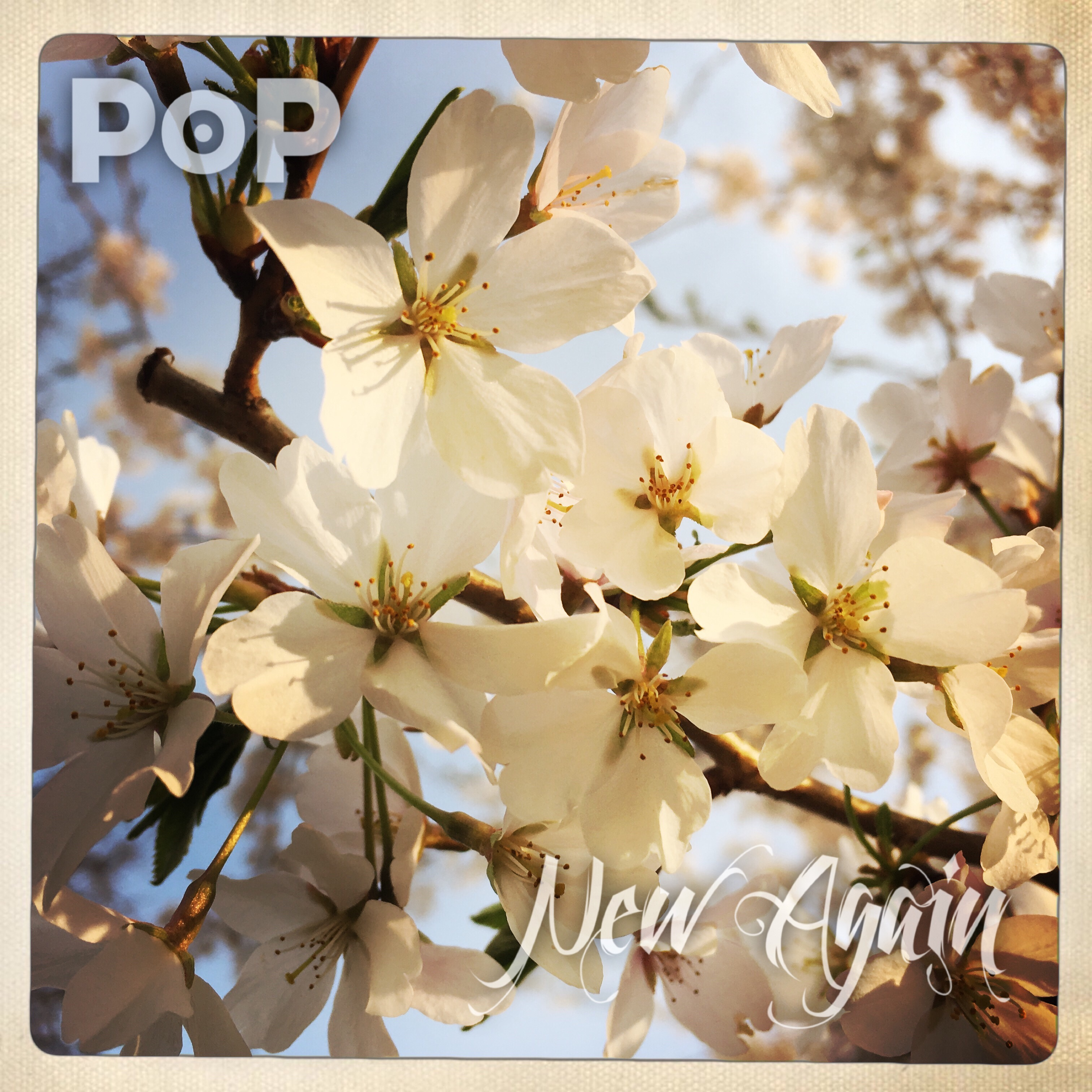 Indie Rock Band PoP's New Single 'New Again'